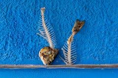 Fish bones of Gilt-head bream - Sparus aurata Stock Photos