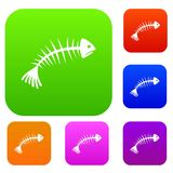 Fish bones set collection Royalty Free Stock Image
