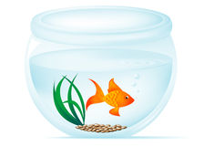 Fish Bowl. Illustration with gold fish, pebbles, grass, bubbles, and ripples Royalty Free Stock Photos