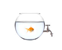 Fish in a bowl with a faucet on it Royalty Free Stock Photo