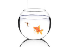 Fish bowl with a fishing hook and a fish. Isolated against white background stock photography