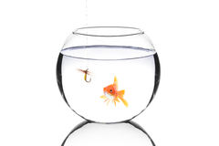 Fish bowl with a fishing hook and a fish Royalty Free Stock Photos