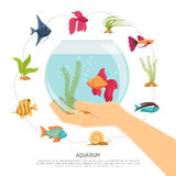 Fish Bowl Hand Composition. Aquarium background with flat images of various fish species and sea weed with editable text description vector illustration Royalty Free Stock Photos