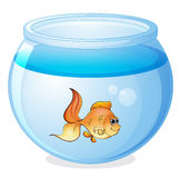 A fish and a bowl. Illustration of a fish and a bowl on a white background Stock Images