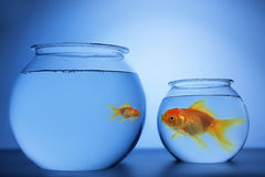 Fish Bowl. A small fish on a big bowl and a small bowl for a big fish Royalty Free Stock Photography