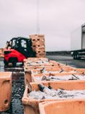 Fish in the boxes of ice in the harbor pier in Iceland. Fresh big fish laying in the yellow boxes of the fisherman, just delivered from the boat in ice with blur Royalty Free Stock Photo
