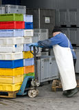 Fish boxes transported. A senior worker with a tray of plastic containers piled up, placing them in a cold storage room royalty free stock images