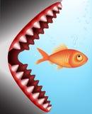 Fish Breakfast   Vector Image Stock Photo