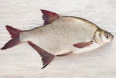 Fish a bream. On a natural background Stock Photo