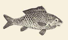 Fish Bream Vintage Engraved Vector Illustration. Hand drawn Stock Image