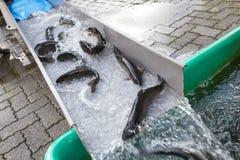 Fish breeding ponds Stock Image