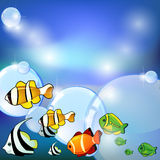 Fish and bubbles. Marine background with different fish and bubbles Royalty Free Stock Photos