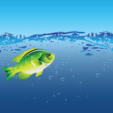 Fish of the bubbles Royalty Free Stock Images