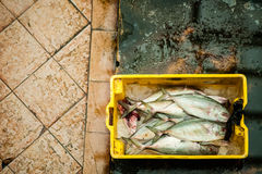 Fish in bucket Stock Images