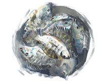 Fish in a bucket handmade watercolor painting isolated on white Stock Image