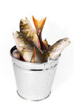 Fish in a bucket on a white background. Fresh catch of fish in a bucket. Isolated Stock Images