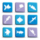 Fish buttons Royalty Free Stock Photo