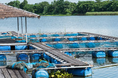 Fish Cage In River.Thailand. Stock Photography