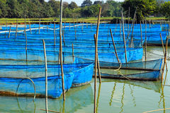 Fish cages in pond Royalty Free Stock Photos