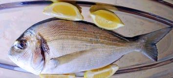 Fish called fresh dorado Stock Image