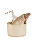Fish can isolated Stock Image