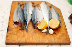Fish carcass with spices Stock Images