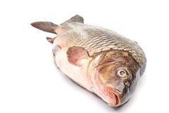 Fish a carp Royalty Free Stock Images