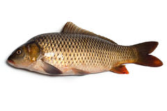 Fish (carp) Royalty Free Stock Photo