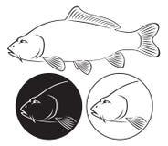 Fish carp. The figure shows a fish carp Royalty Free Stock Photo