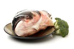 Fish carp. Isolated on the white background Stock Photography