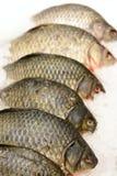 Fish carp on ice Royalty Free Stock Photo