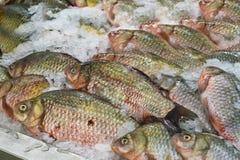 Fish carp lies on the ice. royalty free stock photos