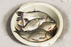 Fish carp lying in a white plate. fishing Royalty Free Stock Images