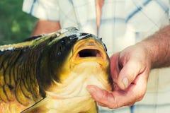 Fish carp Stock Photos