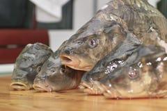 Fish carp. Stock Photo