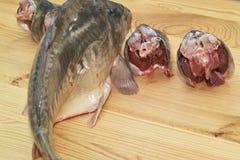 Fish carp. Stock Photos