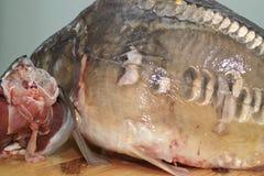 Fish carp. Royalty Free Stock Image