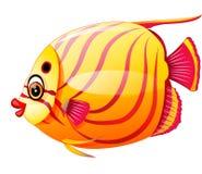 Fish cartoon. Illustration of cute fish cartoon Royalty Free Stock Photo
