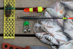 Fish catch Stock Images