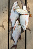 Fish catch Royalty Free Stock Photos