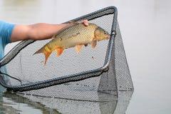 Fish catch and dip net Stock Photos