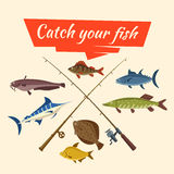 Fish catch and fisher vector tackle and rods. Fishing catch of vector fish sheatfish or catfish, marlin and perch, pike and flounder or salmon, tuna and carp Stock Image