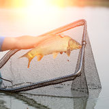 Fish catch in sun rays Royalty Free Stock Images