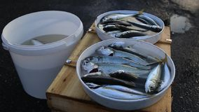 Fish catching stock video footage