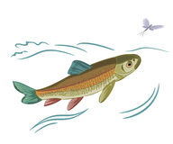 Fish caught ephemera. Vector illustration eps 8 without gradients Royalty Free Stock Photo