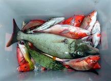 Bucket of Fish Royalty Free Stock Photography