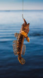 Fish caught Royalty Free Stock Photography