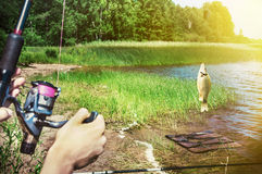 Fish caught on a hook on the background of the lake royalty free stock photo