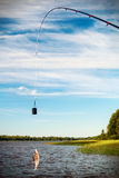 Fish caught on a hook Royalty Free Stock Images