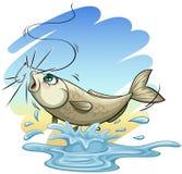 A fish Stock Image